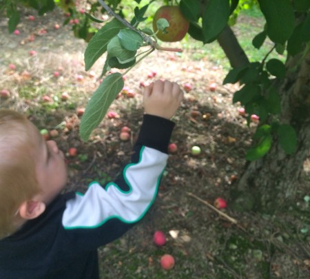Apple Picking Front
