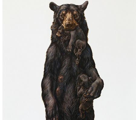 SBP-Bear