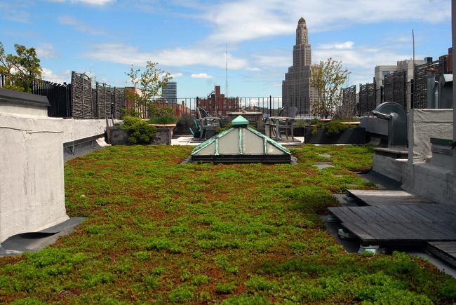 Brooklyn Greenroof Of Brooklyn Heights Helps With Tax